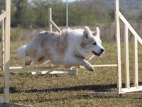 agility - first training with Rosie